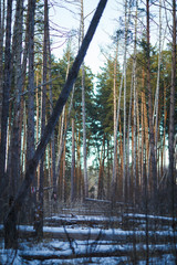 Picture of winter landscape, snow in forest