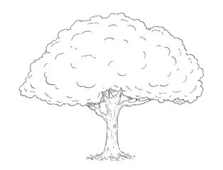 Cartoon vector doodle drawing illustration of broadleaved or deciduous tree.