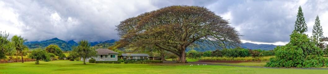 Panoramic view a beautiful tree in northern Oahu Hawaii