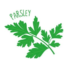 Parsley vector illustration isolated