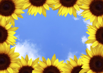 Frame of yellow sunflowers on a blue background