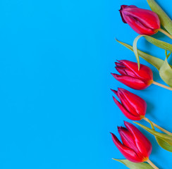 Red tulips on turquoise background. Flat-lay. Negative space.