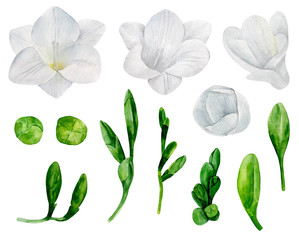 White freesia flowers clip art. Watercolor wedding floral
