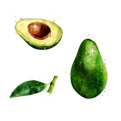 Avocado on white background. Watercolor illustration