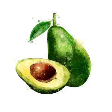 Avocado on white background. Watercolor illustration