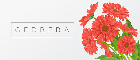Red gerbera daisy flower bouquet with leaf, and text frame. Horizontal banner, vector illustration for spring and summer design