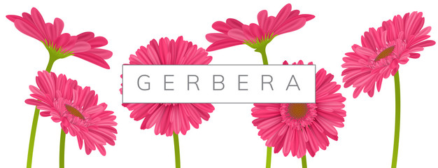 Horizontal banner decoration with pink gerbera daisy flowers and text frame. Vector illustration for spring and summer, isolated on white