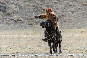 Mongolia. Traditional Golden Eagle Festival. Unknown Mongolian Hunter  ( Berkutchi ) On Horse With Golden Eagle. Falconry In West Mongolia