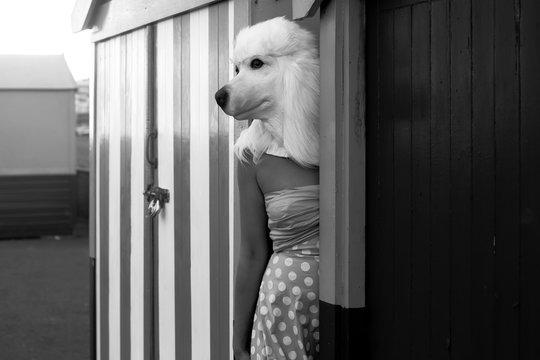 Dog head on model