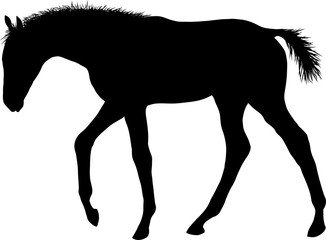 A silhouette of a little sad foal wandering somewhere.