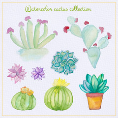 Watercolor cactus and succulent set. Watercolor set of cactus, succulents isolated illustration on a white background, hand draw.