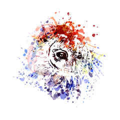 Vector color illustration head owl