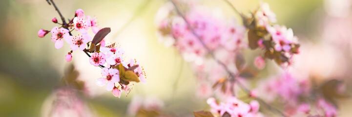 Pink tree flowers, spring blossom