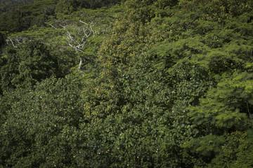 Rarotonga Cook Islands. Polynesia. Tropical jungle forest.