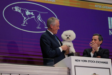 Flynn, a bichon frise and winner of Best In Show at the 142nd Westminster Kennel Club Dog Show, is held by handler Bill McFadden during a visit to ring the opening bell of the New York Stock Exchange in New York