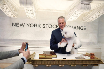 Flynn, a bichon frise and winner of Best In Show at the 142nd Westminster Kennel Club Dog Show, poses with handler Bill McFadden during a visit to the New York Stock Exchange in New York