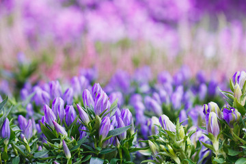 Violet and pink flowers on a spring meadow. Place for text. Full frame.