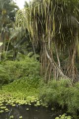 Rarotonga Cook Island. Polynesia. Maire Nui garden