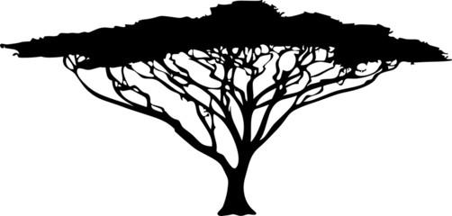 Baum Afrika