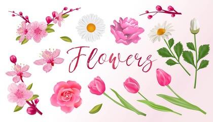 Set of spring flowers. Sakura, tulips, roses.