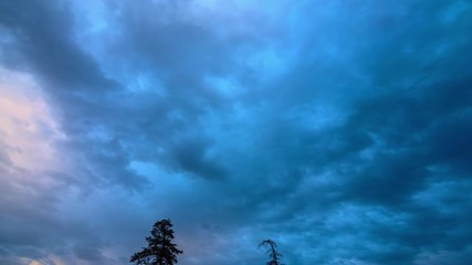 Fotobehang - Blue storm clouds passing over pine trees forest silhouettes. 4K UHD Timelapse