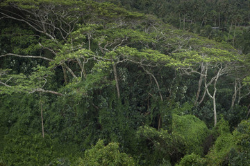 Rarotonga Cook Islands. Pacific. Tropical jungle.