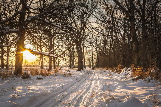 A snowmobile trail travels through oak trees and woods at sunset with a starburst against a tree trunk on a winter evening with snow on the ground.