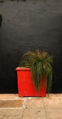 Blumen in einem roten Pflanzcontainer vor einer schwarz gestrichenen wand