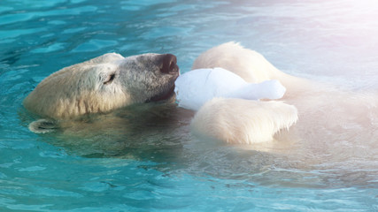 Printed roller blinds Polar bear White Polar Bear Hunter on the Ice in water drops.