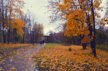 Autumn landscape in the park.Fall foliage.Moscow region,Russia