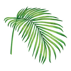 Watercolor painting coconut,palm leaf,green leave isolated on white background.Watercolor hand painted illustration tropical exotic leaf for wallpaper vintage Hawaii style pattern.With clipping path.