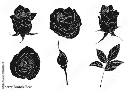 Line Art Rose Flower : How to draw a rose in easy and detailed steps with pictures