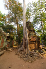 Trees growing on Temple Ta Phrom at Angkor Wat, Cambodia