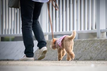 ペット 散歩
