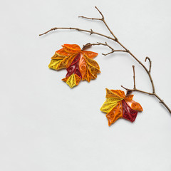 Happy Thanksgiving day / Creative thanksgiving day concept photo of a branch with leaves made of paper on white background.