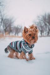 Маленькая собачка в снегу