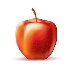 Vector realistic red apple fruit 3d isolated