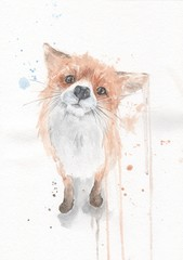 Сute little fox