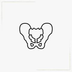 pelvis line icon