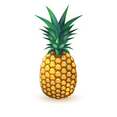 Pineapple realistic summer exotic fruit isolated