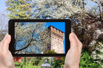 tourist photographs blossoming tree in Vicenza