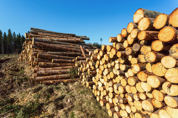 Depots for timber in the woods
