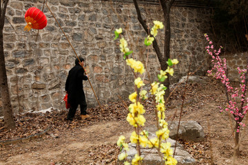A man carries a red lantern as he walks in Badachu park during Spring Festival celebrations marking Chinese New Year in Beijing