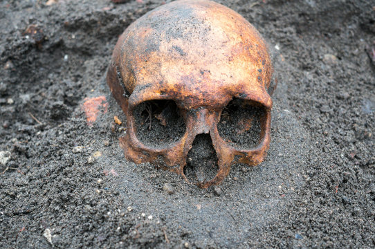 Archaeological excavation with skull still half buried in the ground