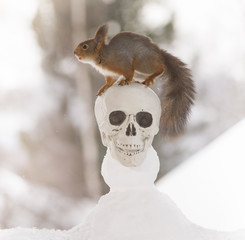 red squirrel on a skull snowman