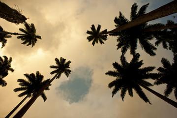 palm plongee
