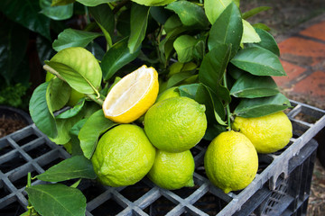 heap of lemons with leaves at the market background