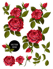 Set of red roses and elements for your design. Vector illustration.