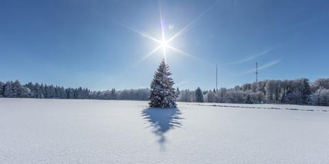 weihnachtsfichte