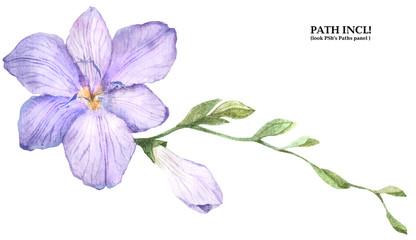 Botanical Watercolor Freesia Branch